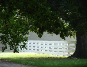 Giant tree over fence